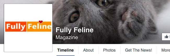 Fully Feline
