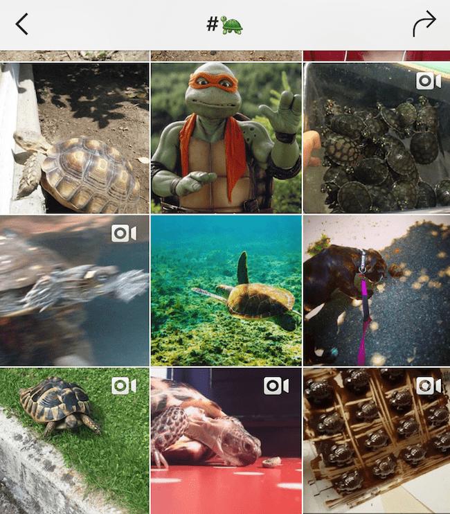 Screenshot of Instagram search of emoji turtle hashtag