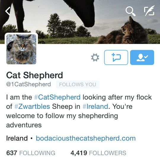 bio-da-Catshepherd