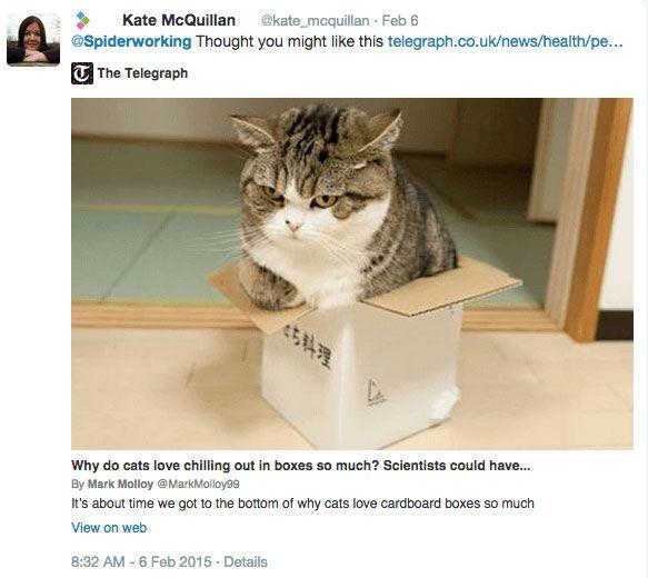 gato-de-kate-twitter-