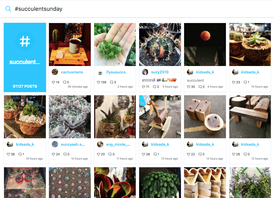 A series of photos of succulents using the hashtag #succulentsunday