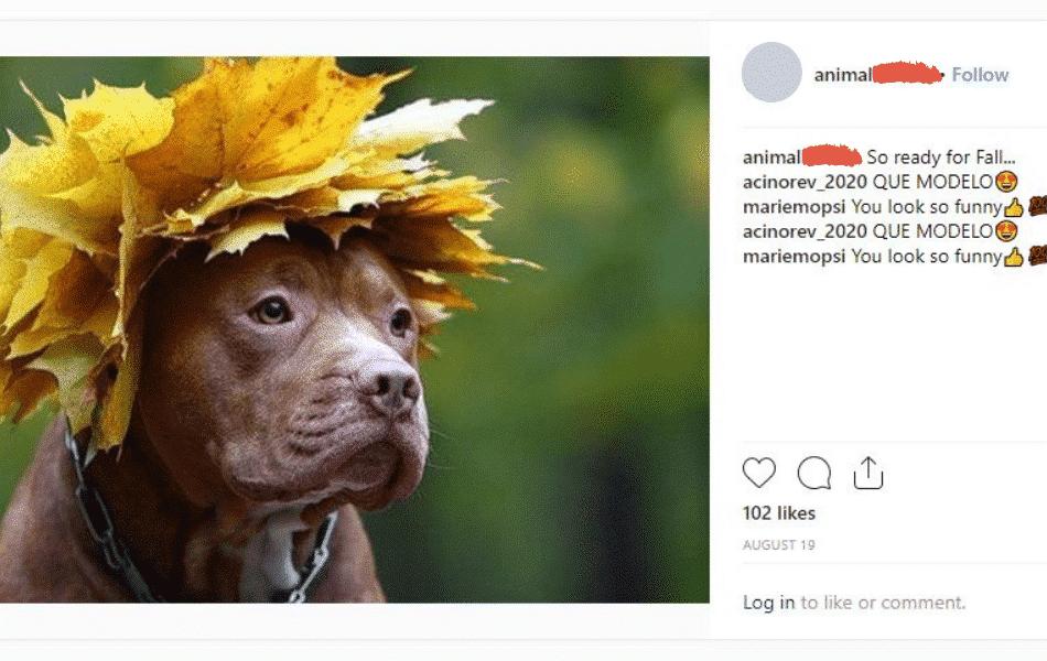 dog wearing a leaf hat